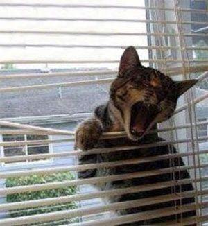 Mačka uviazol na blindoch
