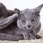 Ako na liečbu alergií u mačiek