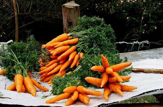 Ako najlepšie ušetriť mrkvu na zimu v pivnici