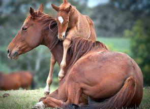 Ako pomenovať kone: zvoliť vhodnú prezývku
