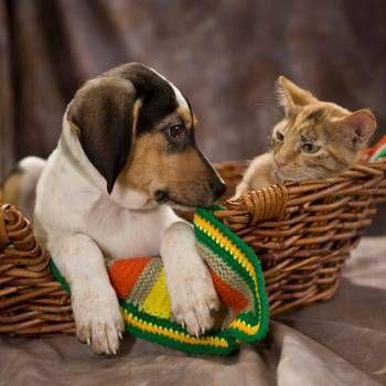 Ako pomenovať svojho maznáčika: vyberte prezývku psa, mačku, papagája alebo iného domáceho maznáčika