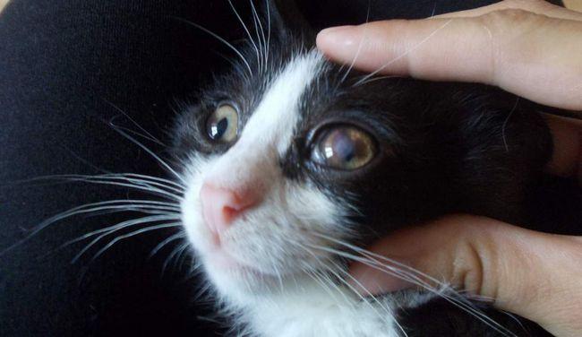Otvorte mačacie oči trochu širšie, takže kvapky padajú na celom povrchu.
