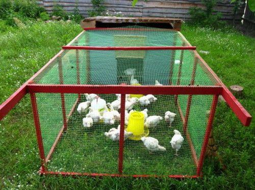 Robíme výbehu Paddock kurčatá