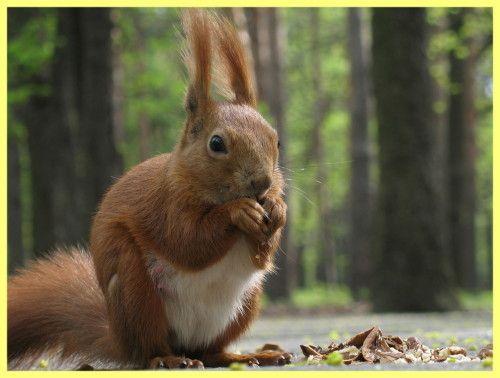 Ako k lovu veverička: opis procesu