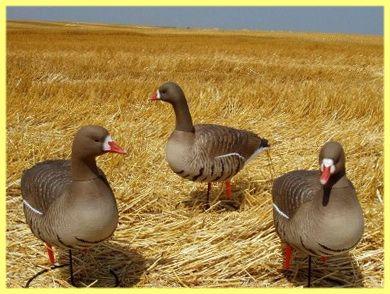 Plyšové zvieratká pre lov husí