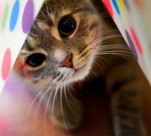 Ako určiť vek mačky
