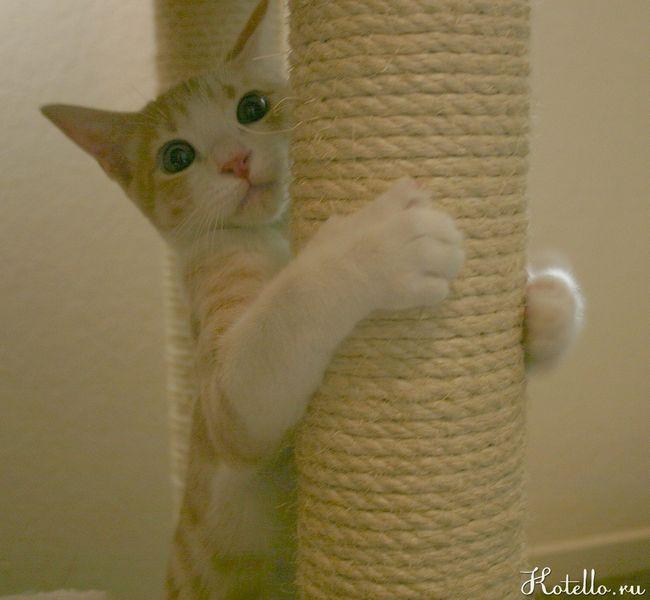 Cum se intarca pisica zgârierea tapet?