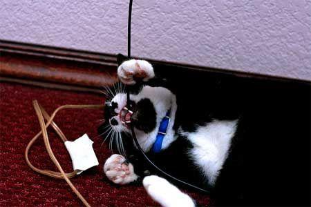Mačka žerie drôt