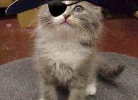mačiatko, pirát