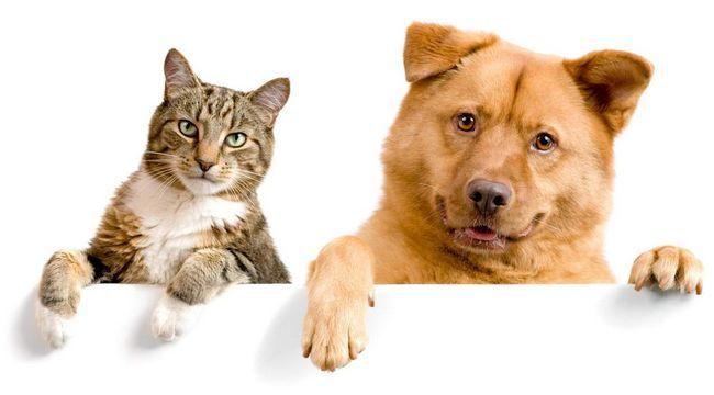 Ako sa spriateliť mačky a psy.