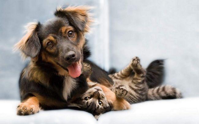 Niekoľko pravidiel, ktoré vám pomôžu dostať na mačku a psa pod jednou strechou.