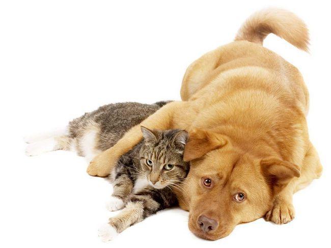 Pes a mačka: môžu spriateliť?