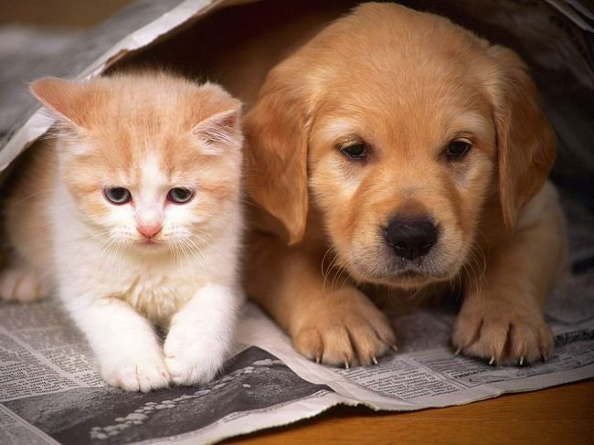Jednoducho pes a mačka priatelia, v prípade, že sú obaja - deti.