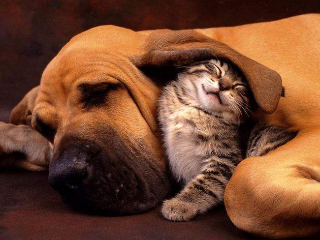 Starostlivosť o svojom blížnom ako mačky sú najlepší priatelia psy.