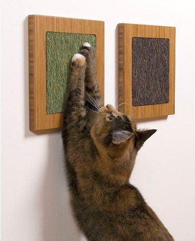 Ako orezať mačka pazúry?