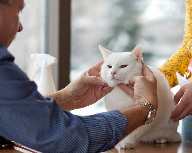 Keď mačka je chorá, už nie je umyť, starostlivosť a inak, keď obnoví, začne normálne správať.