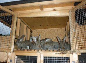 Ako sa stavia králikáreň vo vrstve 2?