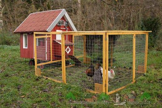 Casa pentru zece găini fotografie