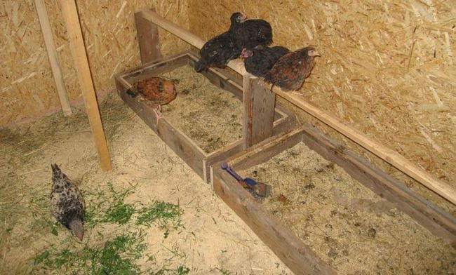 Kurčatá s nimi zaobchádzajú v stodole