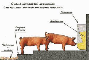 Shed pentru porcii cu propriile lor mâini