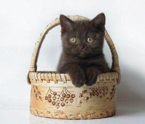 Ako si vybrať mačiatko