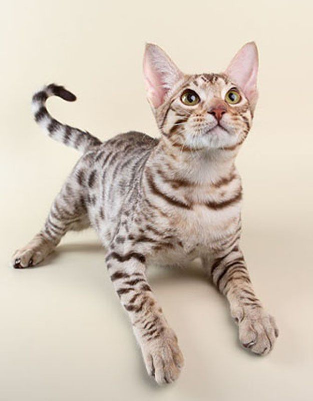 Ako zvyknúť mačku do pomenovanej