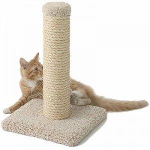 Ako zvyknúť na mačku škrabadlo