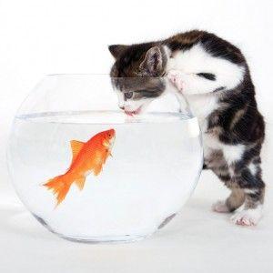Ako zvyknúť mačku piť vodu