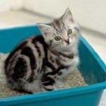 Ako zvyknúť mačku na toaletu