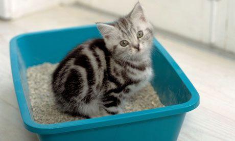 Navyknúť mačiatko na podnose