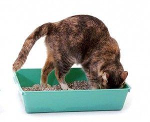 Ako naučiť mačiatko na WC
