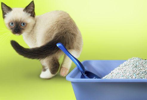 Ako naučiť mačiatko do zásobníka