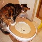 Cum de a preda un pisoi într-un vas de toaletă