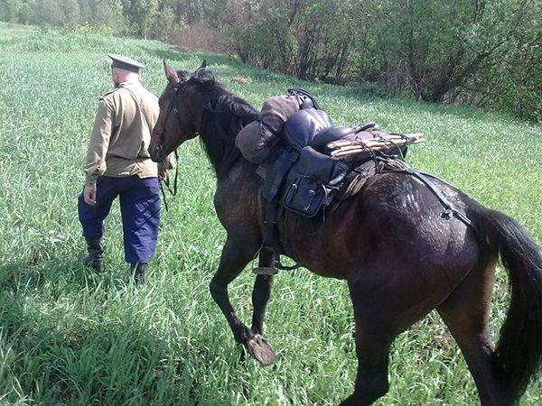 Ako zaťažovanie koňa?