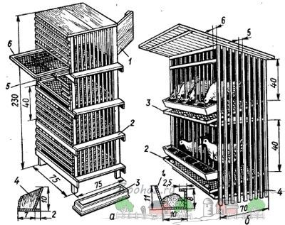 desen celule pentru puii de carne fotografie