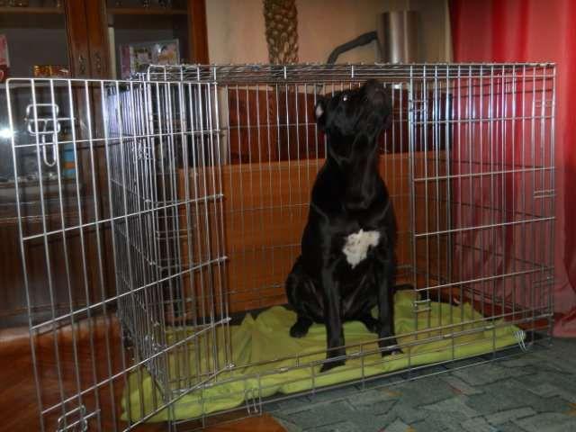 Câine în cușcă de plasă