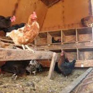 Ako vytvoriť svoj vlastný ruky úkrytov pre kurčatá?