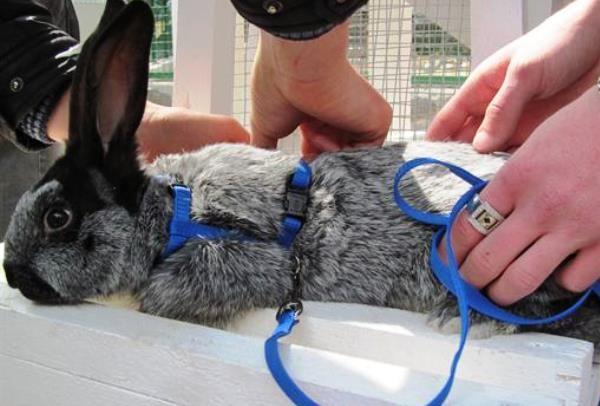 Rabbit šaty remienok