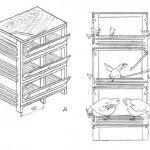 desen celule cu un etaj reglabil pentru adulți și pui