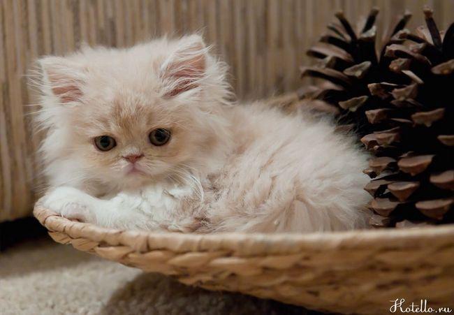 Ako sa starať o mačku