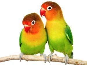 Nainštalovať bidielka pre papagáje