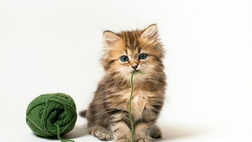 Ako liečiť hnačka u mačiatok doma?