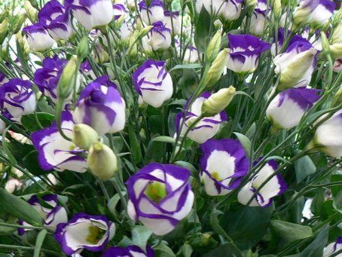 Aust ako pestovať zo semien doma