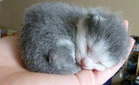 Kitten bez mačky