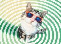 cat_vision-jpeg
