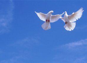 Ce fel de porumbei sunt crescute în Asia și Caucaz?