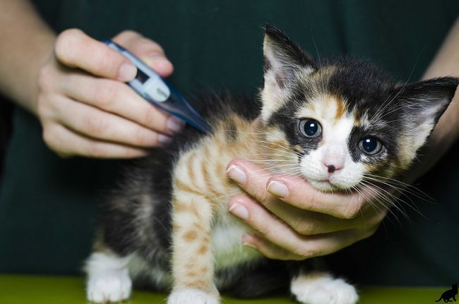 Čo by sa malo dýchanie, pulz a teplota zdravej mačky