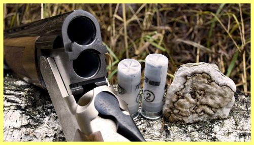 Ce un vânător pușcă pentru a alege un incepator