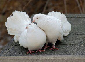 Aká je životnosť opatrení z holubica?