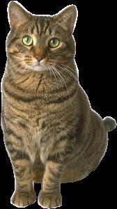 Какви са ползите котки
